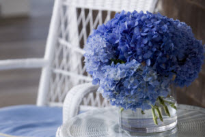 Patio area with white wicker furniture and blue hydrangeas