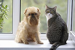 A cat and dog on window sill