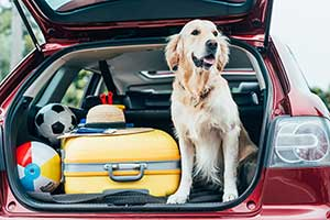 Dog still in tailgate of SUV with suitcases